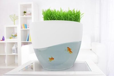 Vegua enables aquaponic growing of herbs fruits and vegetables kitchenware - Objet design insolite ...